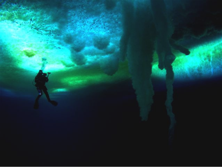 Diver in distance behind brine tubes_incredible visibility