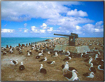 Midway-Atoll and albatrosses