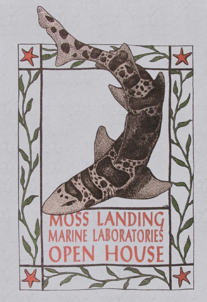 1996 leopard shark_Jane Schyutema
