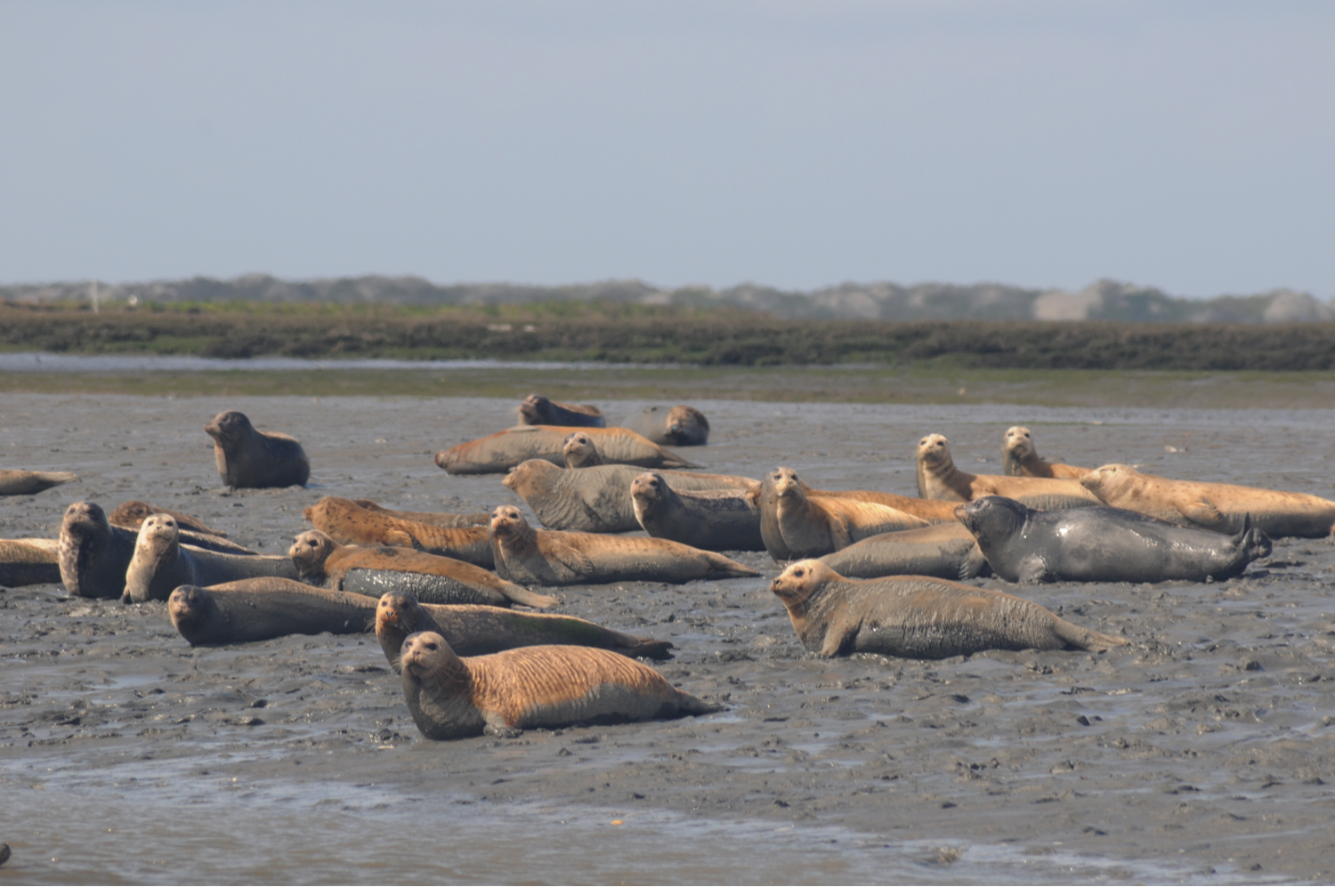 seals in Elkhorn Slough