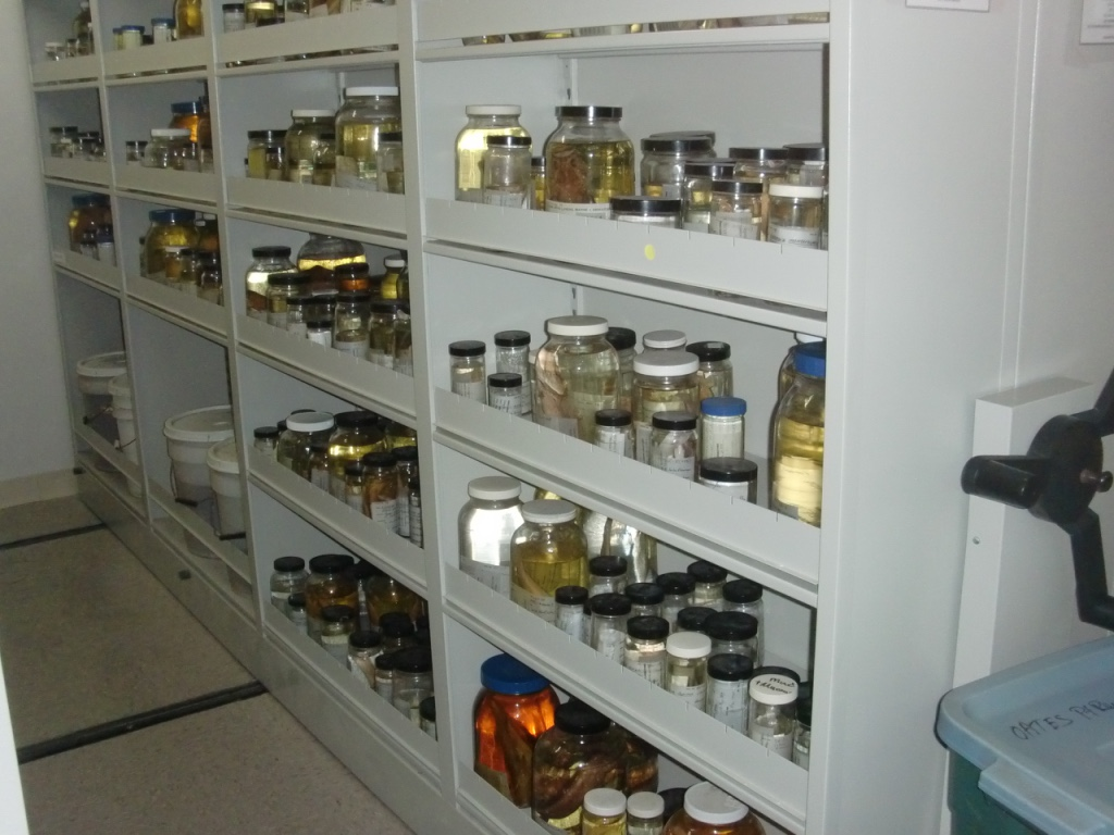 compact shelving with fish specimens thumb_CIMG0012_1024
