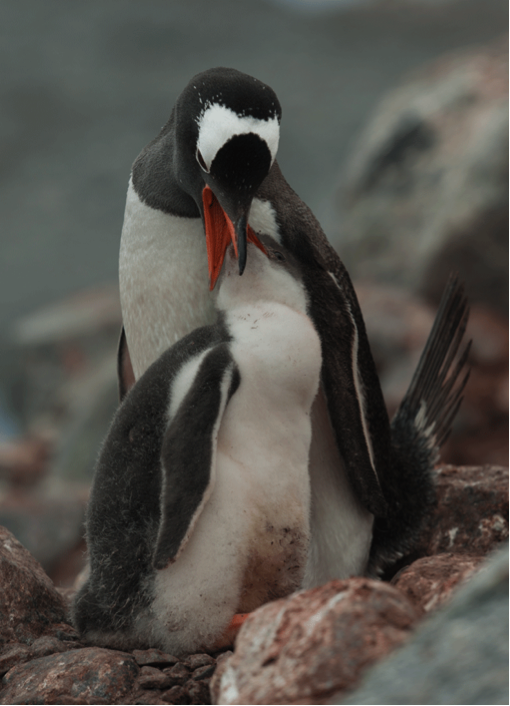 Penguin_photo by Scott Hansen