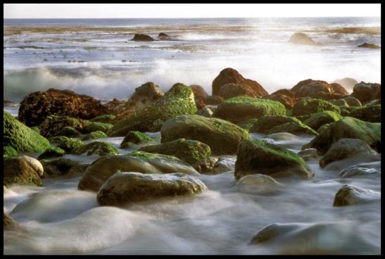 algae on rocks