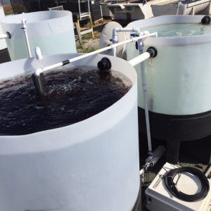 300-gallons integrated seaweed tanks.