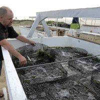 Santa Cruz Sentinel: Aquaculture: The next great Monterey County frontier?
