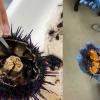 Sea Grant: Combating Urchin Barrens with Aquaculture