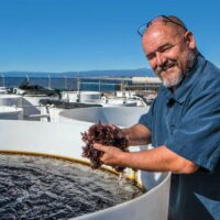 Professor Mike Graham and Monterey Bay Seaweeds featured in NBC video