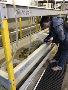 Graduate student, Vivian Ton, testing seawater characteristics.
