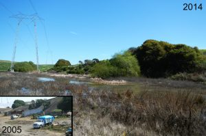 Former agricultural parking area restored to a wetland (2005-2014)