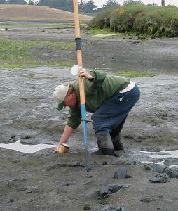 Sampling infauna in upper Elkhorn Slough