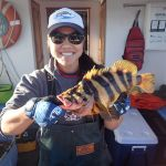 Jen C. with a treefish on a CCFRP trip