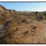 Development of New Tools to Assess Riparian Extent and Condition-A Central Coast Pilot Stud-Final Report USEPA Wetlands Program Development Grant CD- 00T83101