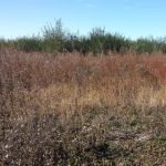 CRAM Assessment of the Watsonville Slough Farms-Bryant Habert Property