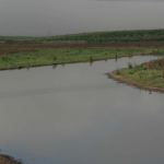 Implementation of the Moro Cojo Slough Management and Enhancement Plan: Restoration of the Core of the Watershed