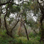 Amphibian Conservation Strategy for Northern Monterey County