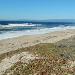 The Greater Salinas River State Beach Dune Restoration and Management Plan