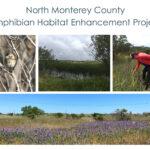 North Monterey County Amphibian Habitat Enhancement Project - Final Monitoring Report June 2021