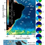 New publication: sinking phytoplankton associated with carbon flux