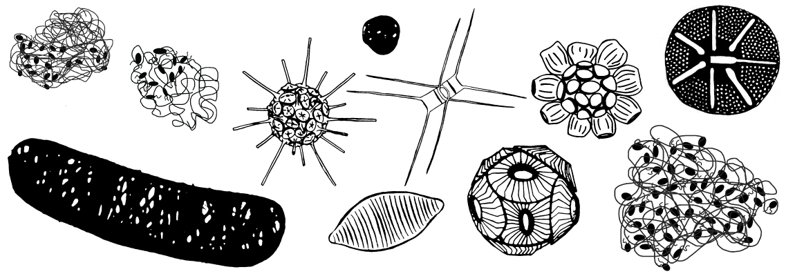 Research: identifying sinking particles and phytoplankton