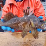 Gopher rockfish caught