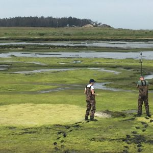 Surveying at the Elkhorn Slough with the Habitat Mapping Class
