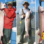 These two white sturgeon and striped bass were caught in San Francisco Bay during the 2006 Regional Monitoring Program's (RMP) fish contaminant survey.
