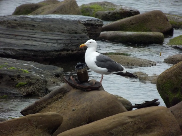 Seagull and coffee mug