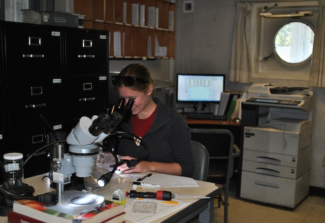Biological oceanography student Heather Fulton-Bennet counts live zooplankton under a microscope on the TS Golden Bear