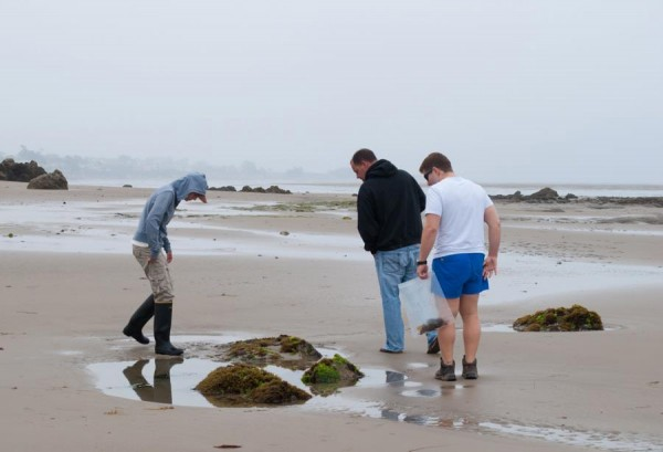Our teaching assistant, Sarah Jeffries, Professor Mike Graham, and phycology student Bobby San Miguel examine one of the boulders still visible above the sand.