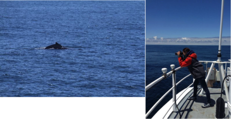 Surveying for humpback whales off California. Photos by Angela Szesciorka.