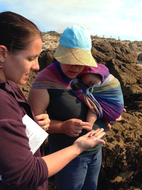 Ichthyology Lab student Heather Kramp shows some intertidal organisms to an interested chaperone and the youngest field trip participant. Photo: Diane Wyse (2013)