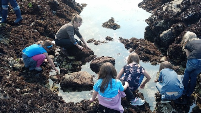 Benthic Ecology Lab student Dorota Szuta teaches a group of fourth grade girls about intertidal invertebrates. Photo: Diane Wyse (2013)