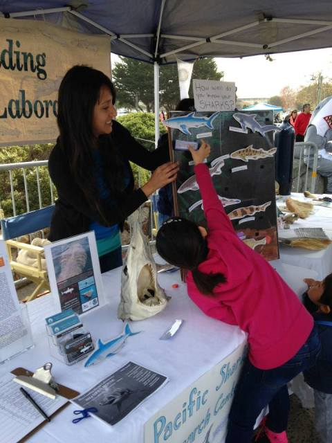 How well do you know your sharks? PSRC student, Vicky Vasquez, helps a girl figure it out.