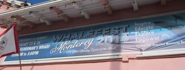 Whalefest banner 2014