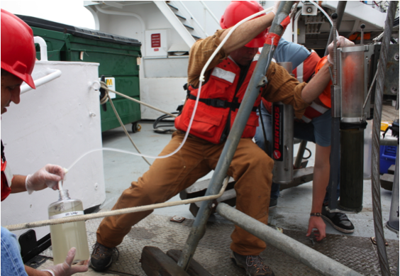Siphoning overlying bottom water from sediment cores. (Photo by Diana Steller)