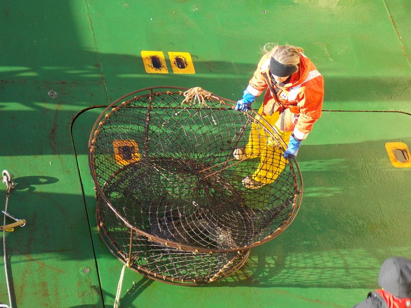 Kristin, one of the PIs of the icefish project getting ready to unload a fish.