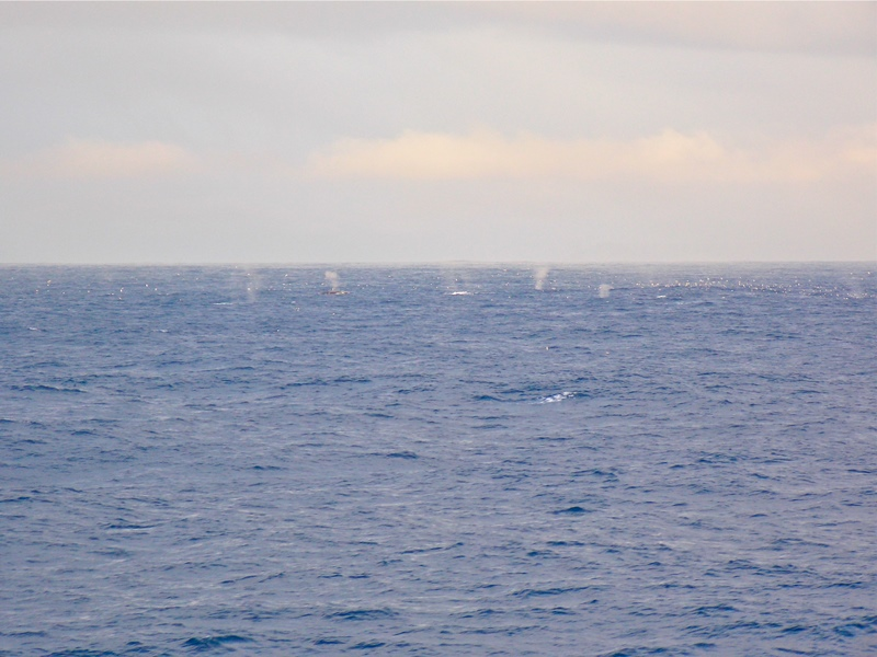 This was a pod of whales we encountered, there were about 35 of them and about 1500 birds. They were most likely feeding on krill.