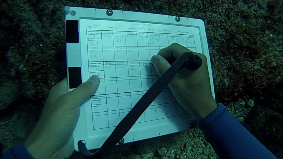 Although the goal of fish surveys is to count and size fishes, they require a lot of underwater writing!
