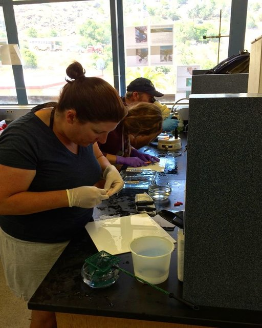 Determining sex, measuring length, and tagging our gobies in the lab! Photo by Alexis Estrada.