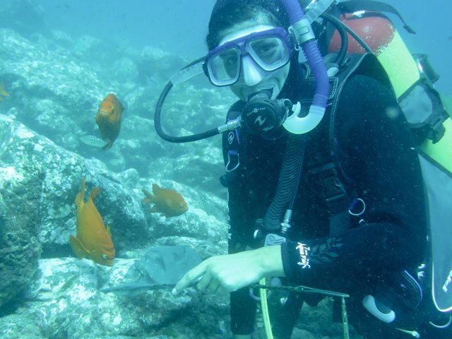 Erika Nava collecting gobies for our reefs! Photo by Dr. Mia Adreani.