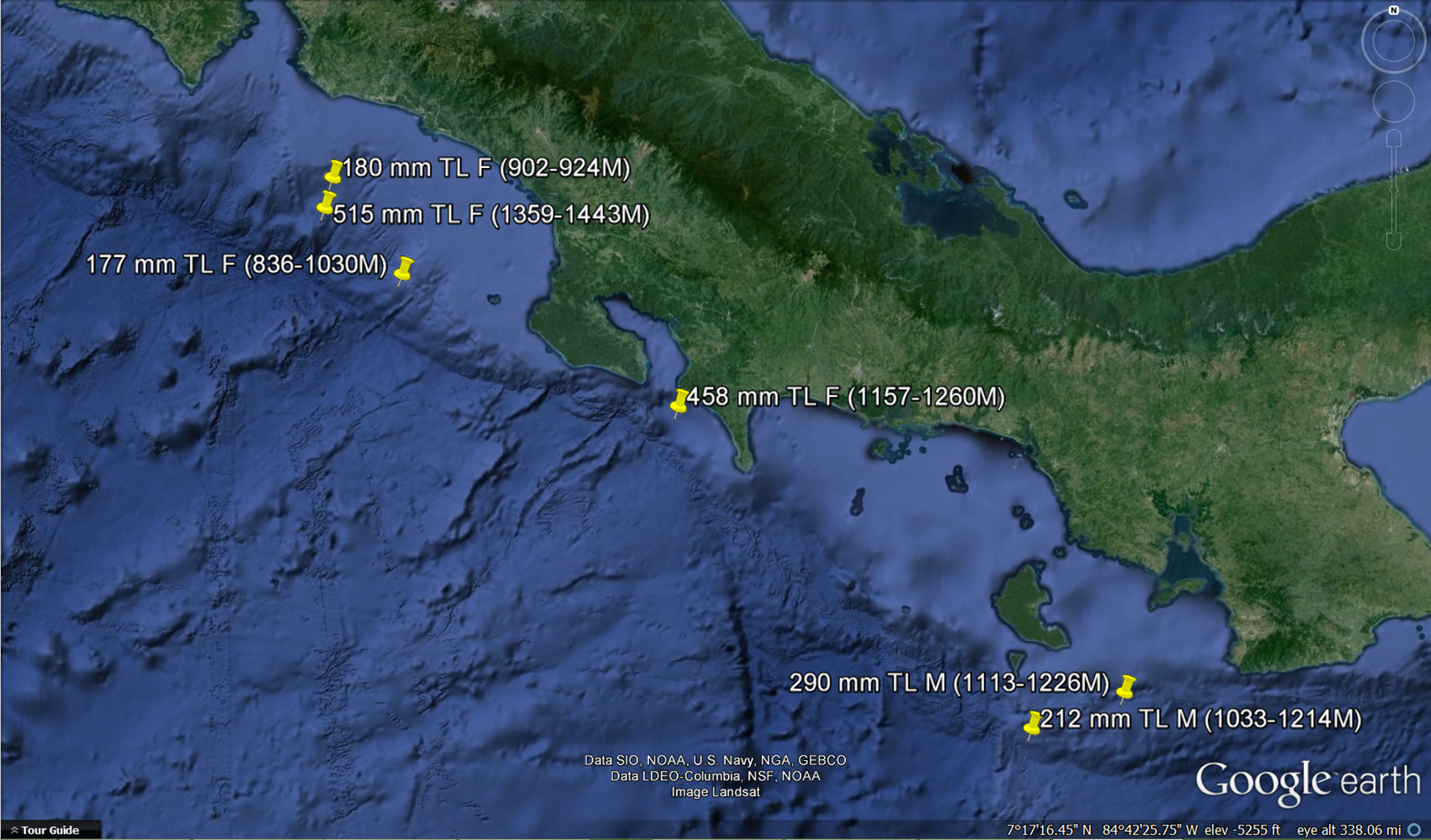 Map of where each of the eight specimens were collected. Depth ranged between 836-1443 meters.