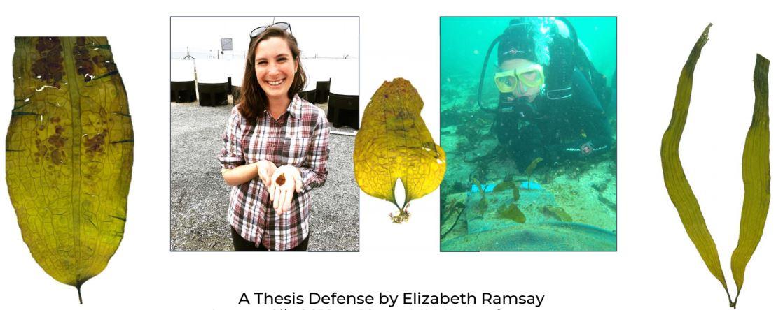 Elizabeth Ramsay_defense