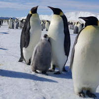 Living among emperor penguins: 2019 field expedition to Antarctica