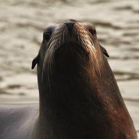 Marine science snapshots: Fieldwork, wildlife, and community at Moss Landing Marine Labs