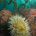Stillwater Cove: A Magical Diving and Research Spot