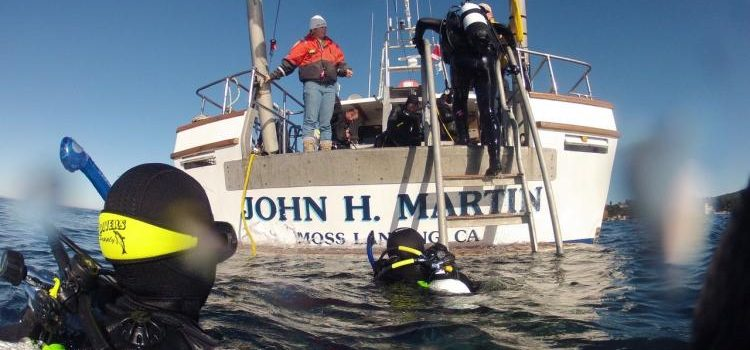 Diving-Martin