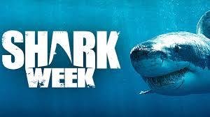 MLML's Vicky Vasquez on Discovery Channel's Shark Week 2017
