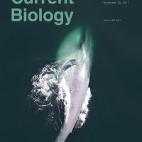 MLML's Dr. Alison Stimpert co-authored recently published study on blue whale behavior