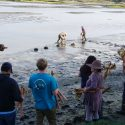 MLML Researchers Plant Baby Oysters in Partnership with the Elkhorn Slough National Estuarine Research Reserve