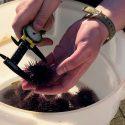How urchin ranching can help kelp